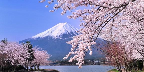 Núi Phú Sỹ & hoa anh đào Nhật Bản