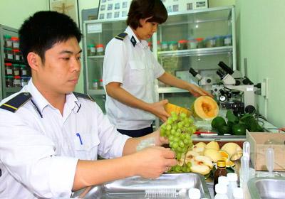 Kiểm dịch trái cây nhập khẩu